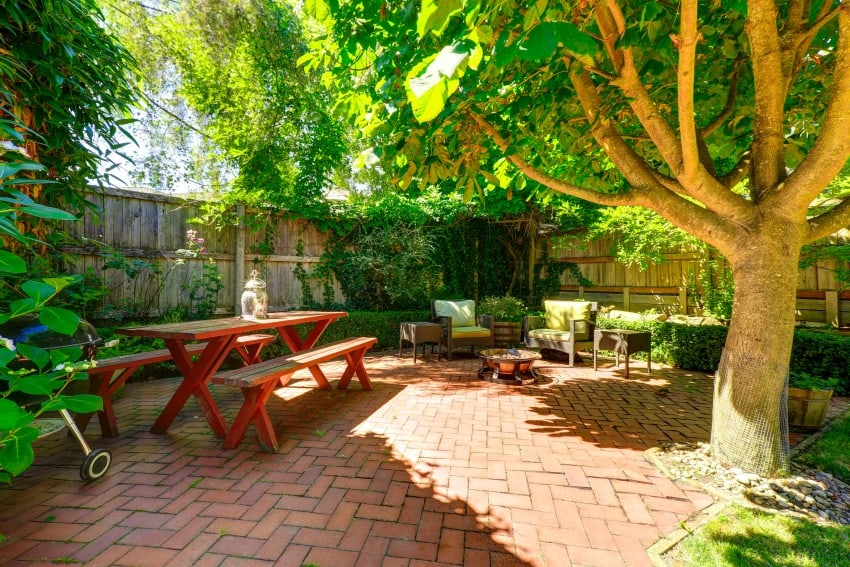 big tree with shade in garden