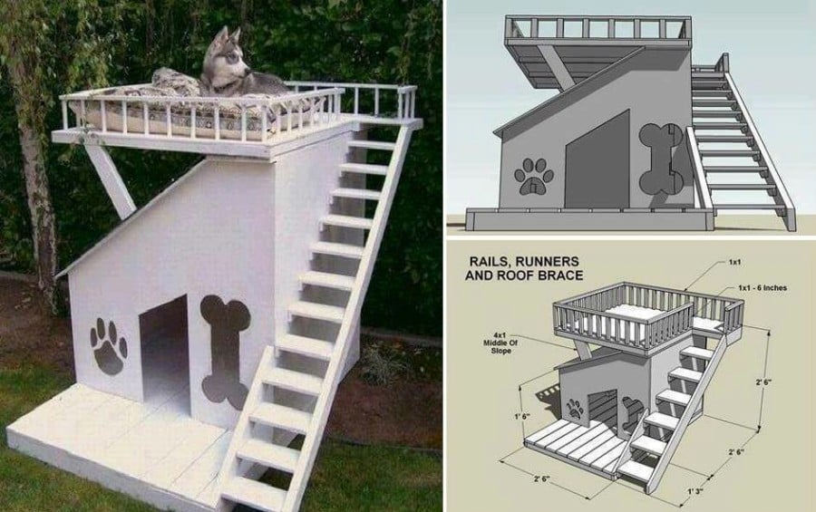 Dog-House-with-Roof-Top-Deck
