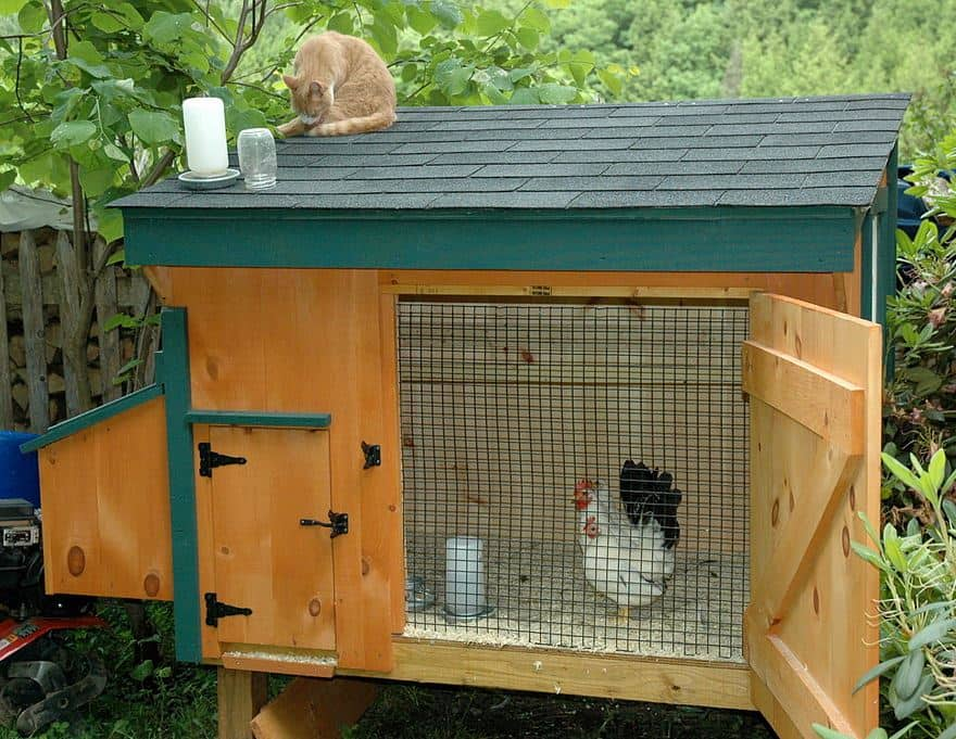 bantams_in_chicken_coop15 small - Chicken Coop Design Ideas