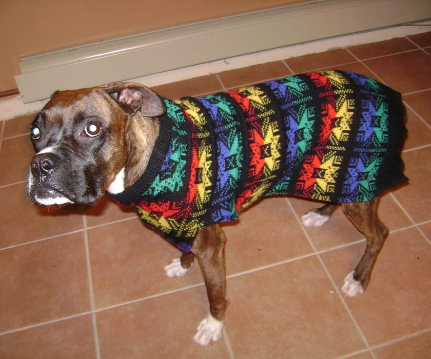 dog ugly sweater