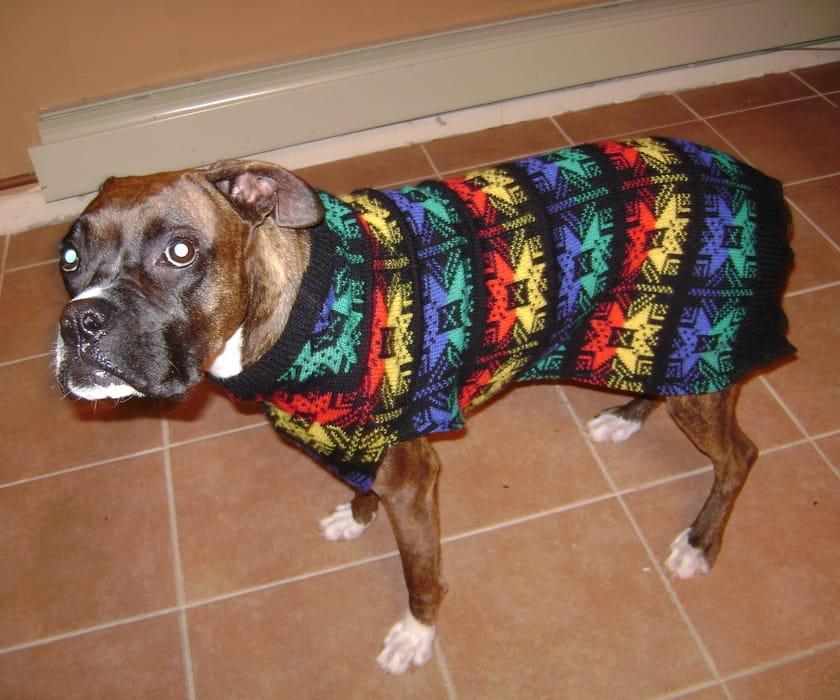 dog ugly sweater