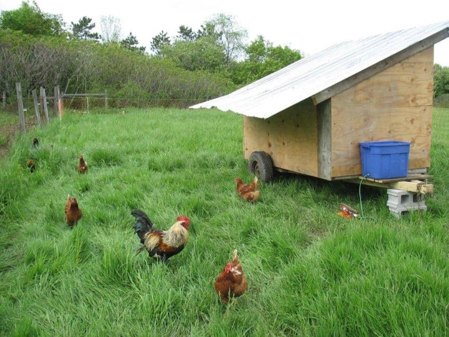 mobile tractor chicken coop