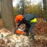 Tips For Felling Trees