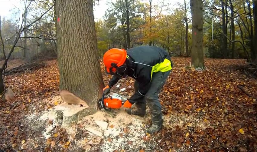 Tips For Felling Trees