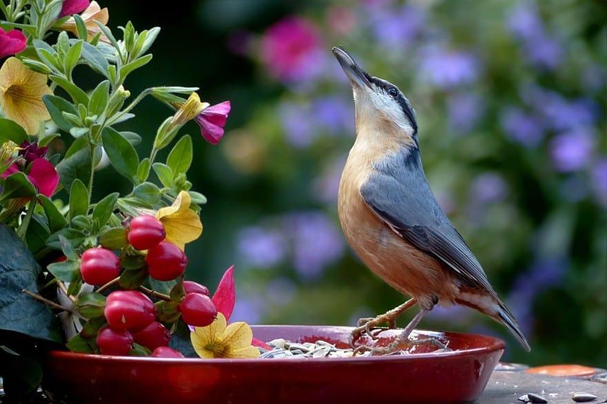 bird on planter