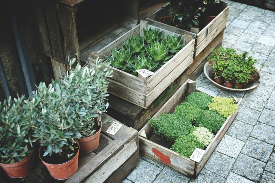 2018 Gardening Trends All Millennials Will Be Following
