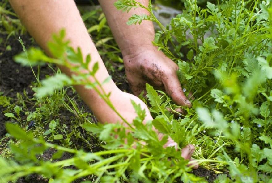 remove weeds