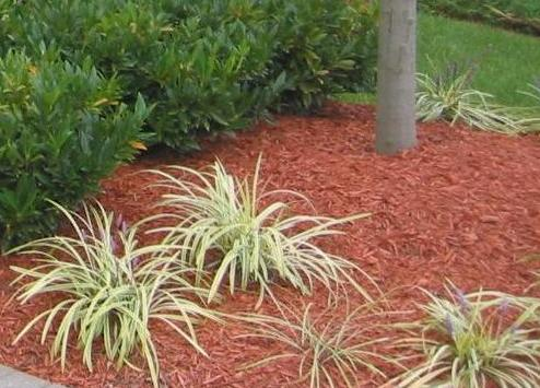 shredded wood as mulch