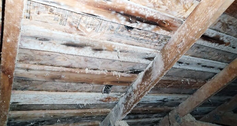 Molds in crawl space building foundation