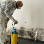 Silent and Deadly: How to tell if Mold is Toxic and What to Do if it's in Your Home