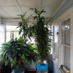 indoor plants grow room