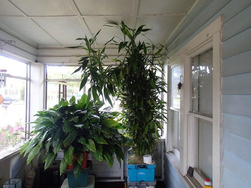 indoor plants grow room