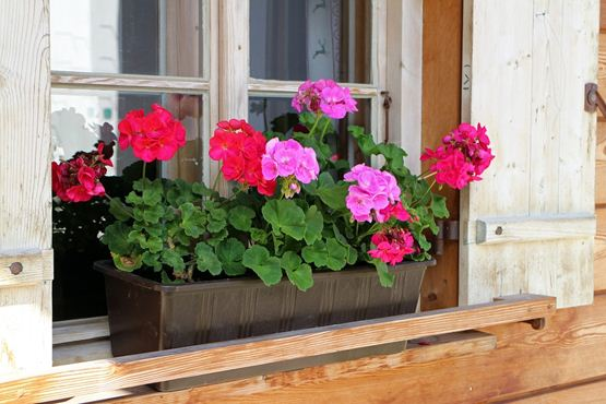 Window Flower Pot