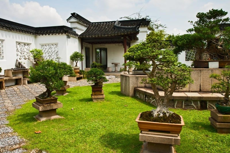 outdoor bonsai garden