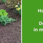 How Much Mulch Do I Need in my Garden? Importance of Mulch