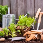 10 Amazing Benefits of Vertical Gardening