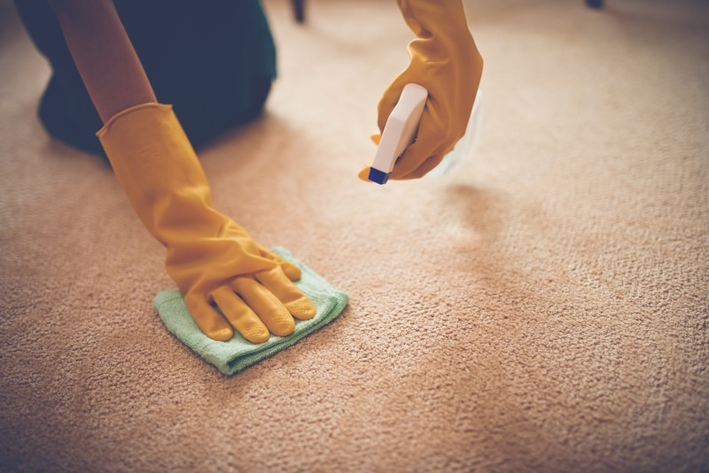 person removing stain from carpet